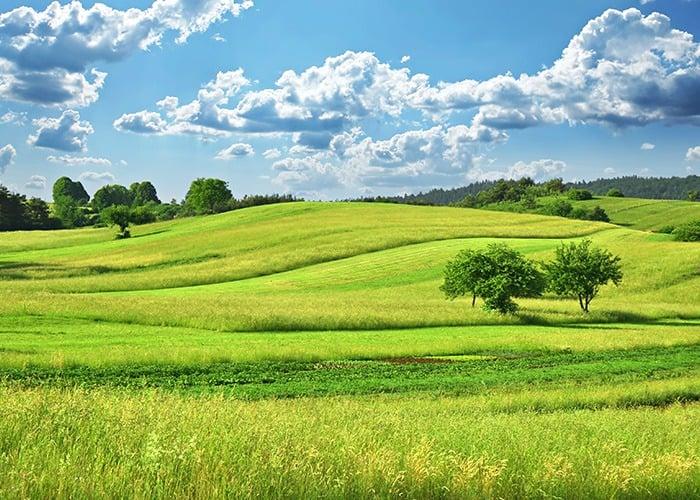 השקעה בקרקע חקלאית – האם כדאי?